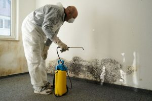 6 Tips To Help Prevent Mold In Your Home in Naples, FL
