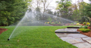 How Often You Should Water Your Lawn in Michigan?