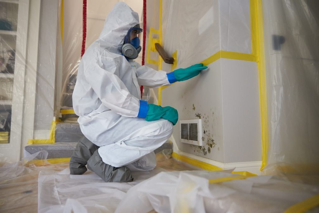 Why You Shouldn't Perform Mold Removal on Your Own