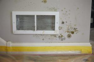 Can Mold Make You Sick?