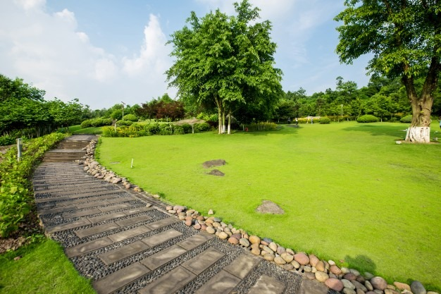 Types of Grass and How to Choose The Best Type for Your Lawn
