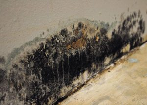 Top Tips for Mold Cleanup at Home