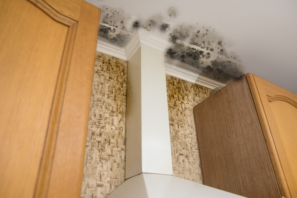 How Important is it to Test your Home From Mold?