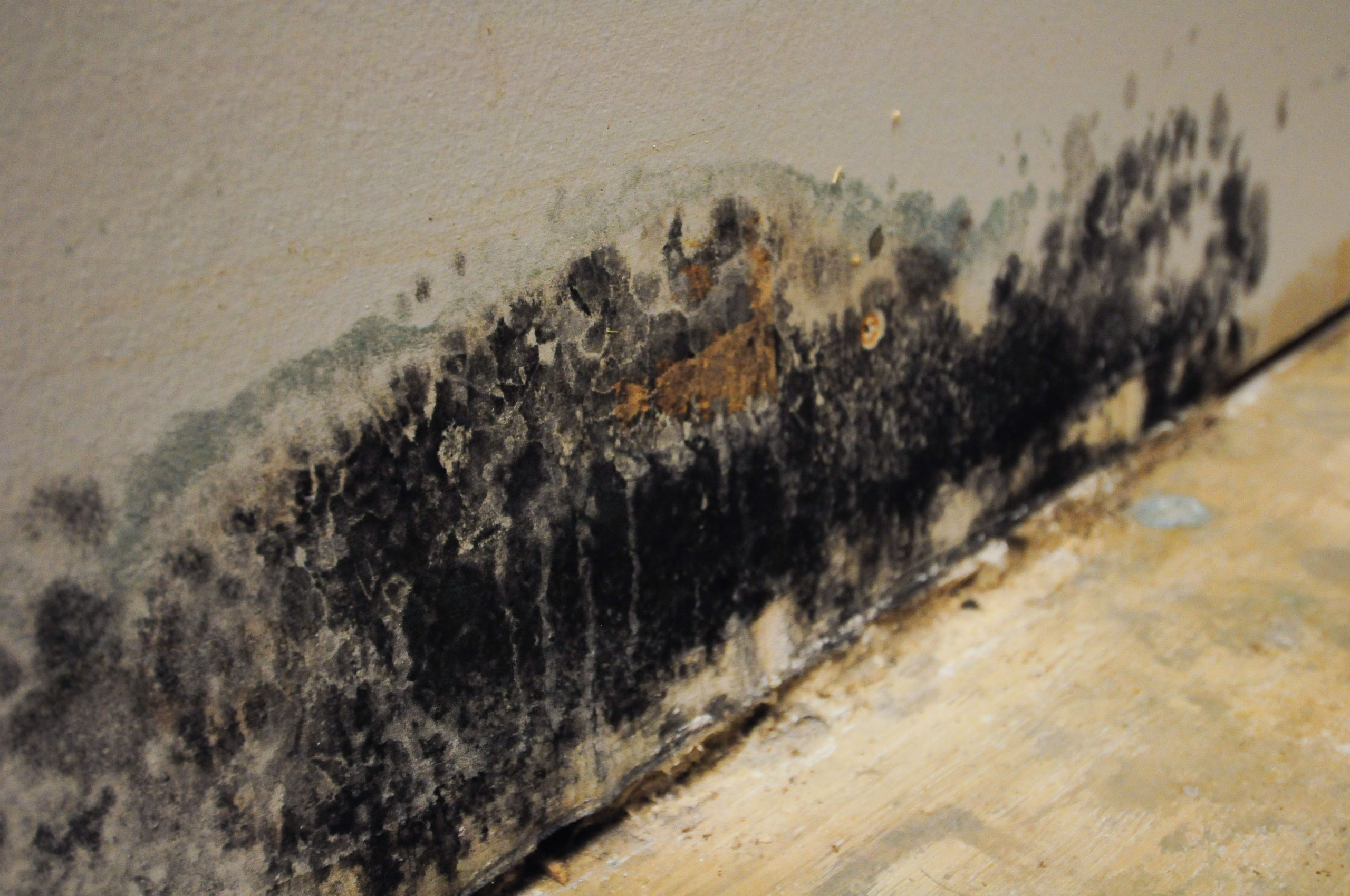 Why You Shouldn't Use Bleach on Mold