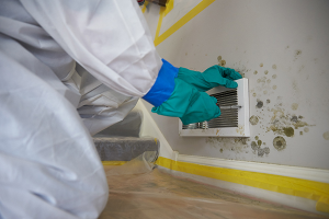 Benefits of Hiring a Professional Mold Remediation Company