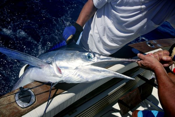 The Ultimate Guide to Blue Marlin Fishing