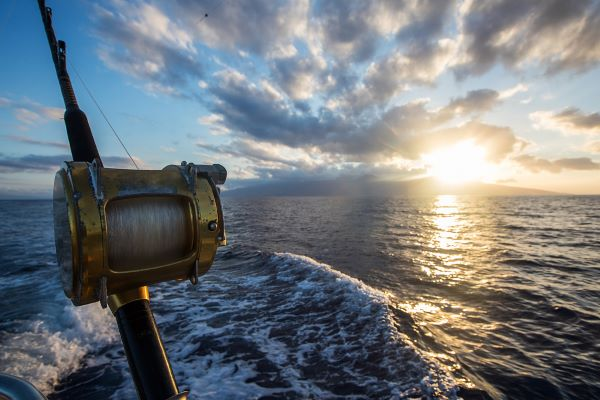 Tips to Choose the Best Fishing Rod in Stuart, Florida