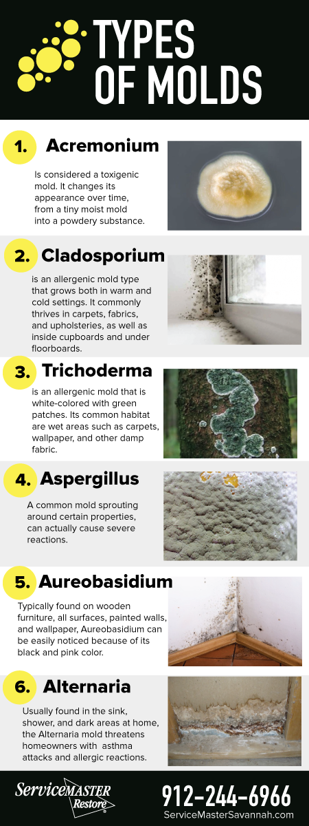 21 Facts About Mold